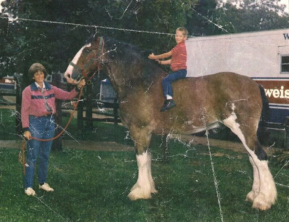Budweiser Clydesdales Stay At Woodsong Farm - Mid-1980's